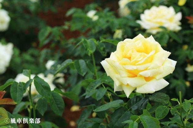 gardening_4175.JPG