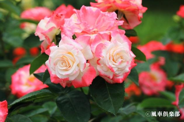 gardening_4176.JPG