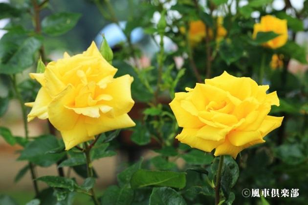 gardening_4177.JPG