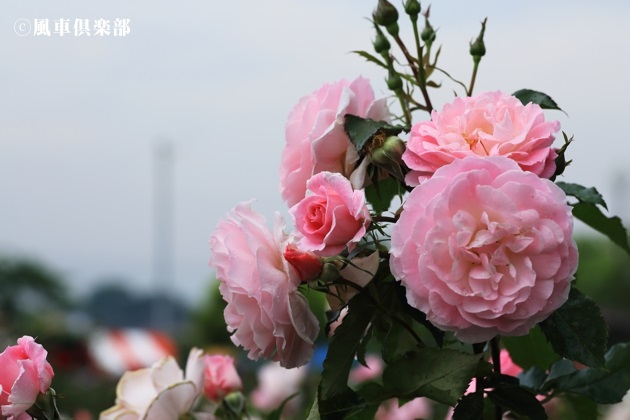 gardening_4178.JPG