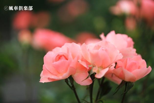 gardening_4179.JPG