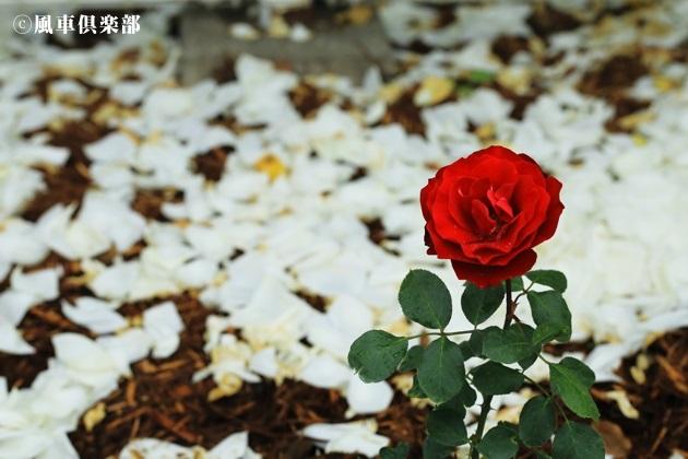 gardening_4180.JPG