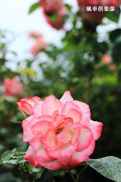 gardening_4183.JPG
