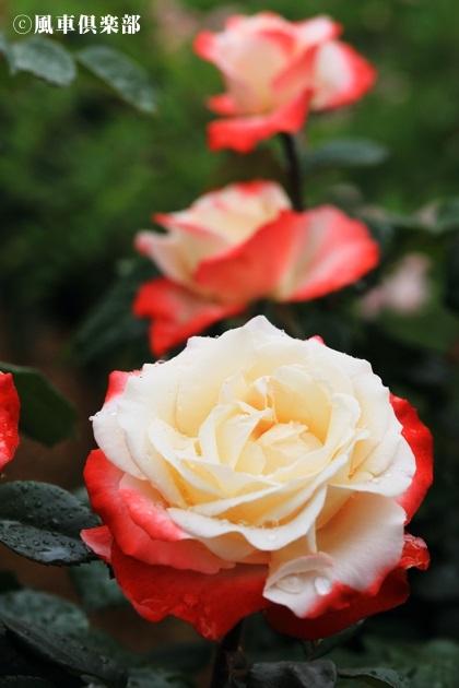 gardening_4184.JPG