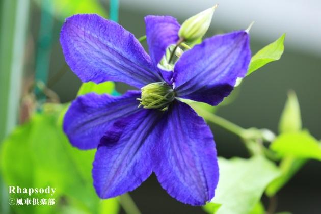 gardening_4185.JPG