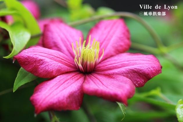 gardening_4187.JPG