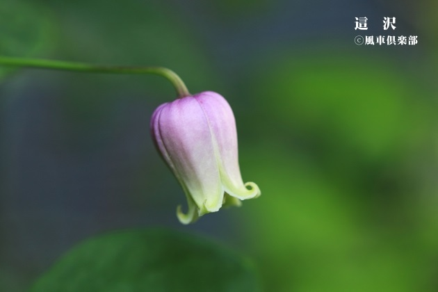 gardening_4190.JPG