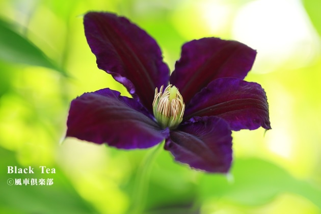 gardening_4198.JPG