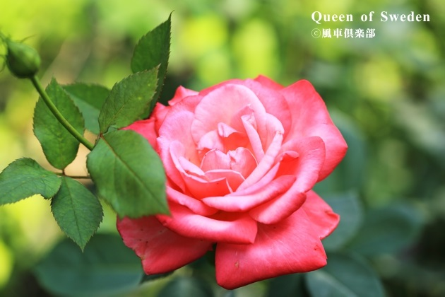 gardening_4199.JPG