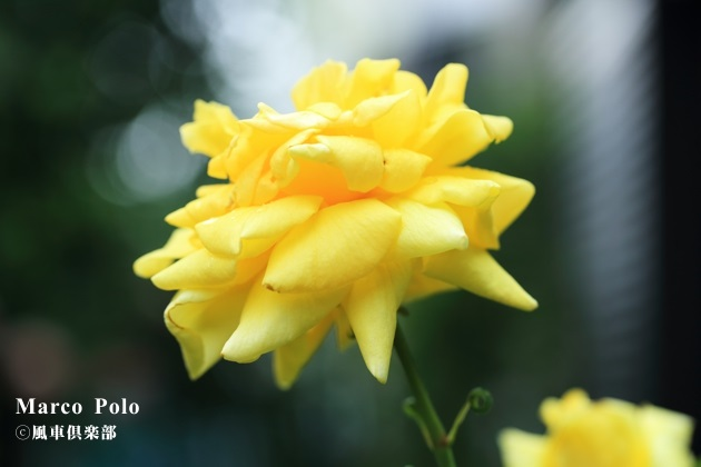 gardening_4200.JPG