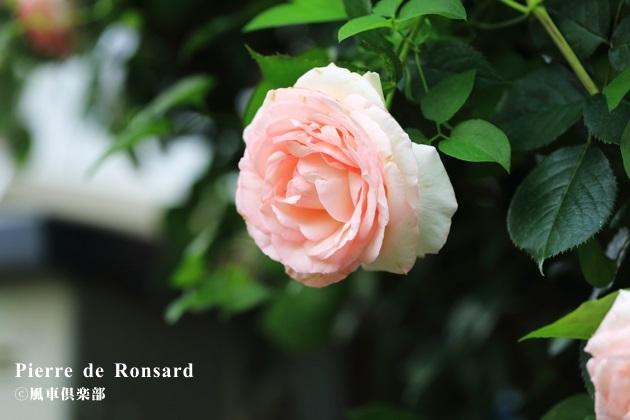 gardening_4201.JPG