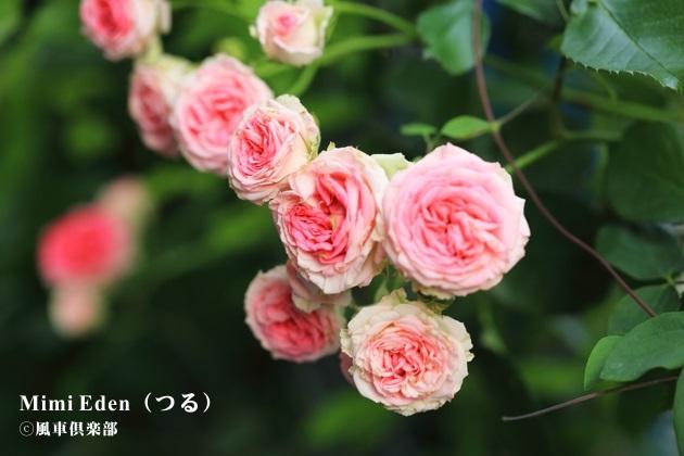 gardening_4202.JPG