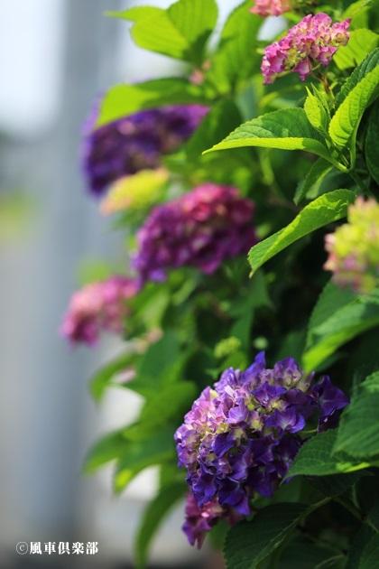 gardening_4205.JPG