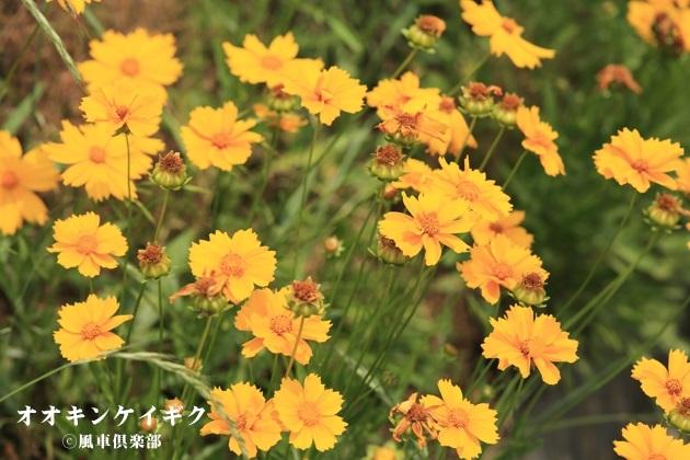 gardening_4206.JPG