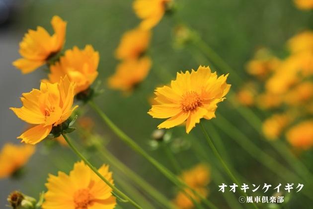 gardening_4207.JPG