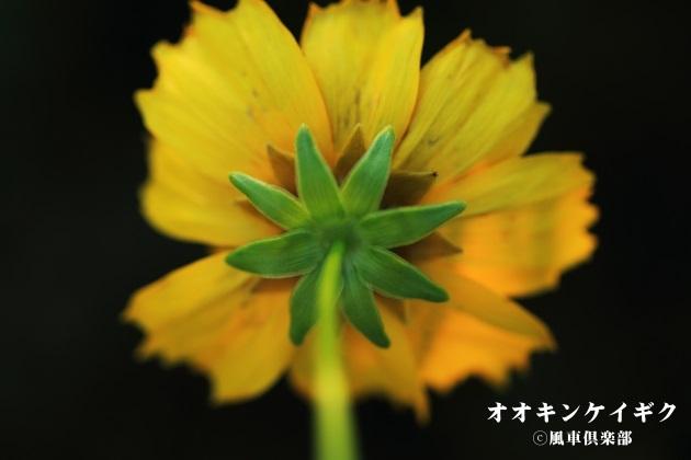 gardening_4208.JPG