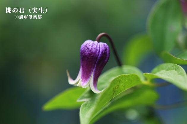 gardening_4210.JPG