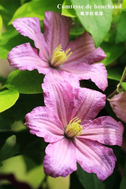 gardening_4212.JPG