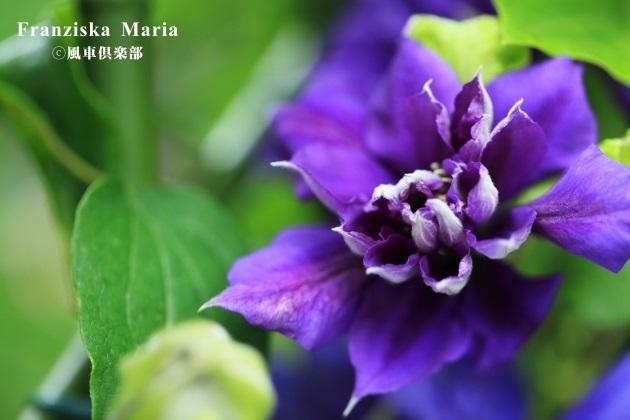 gardening_4216.JPG