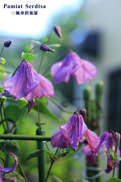 gardening_4220.JPG