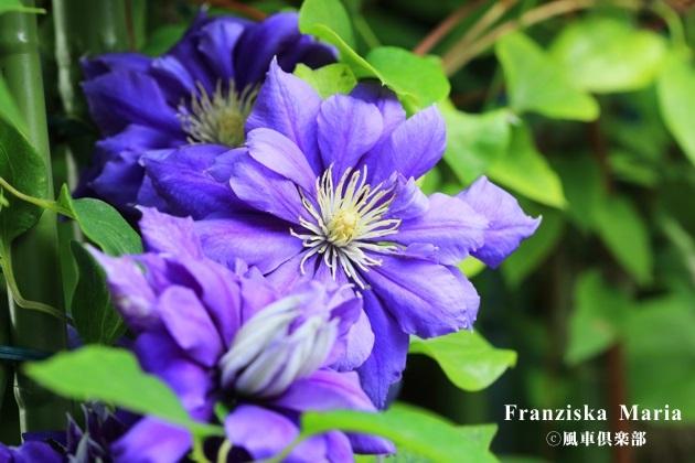 gardening_4225.JPG