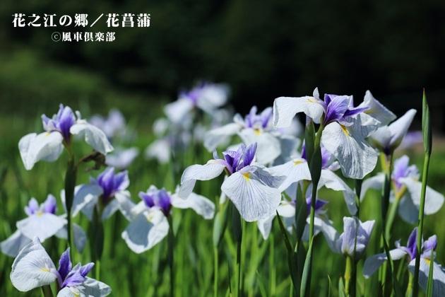 gardening_4226.JPG