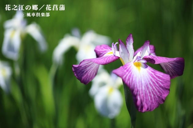 gardening_4228.JPG