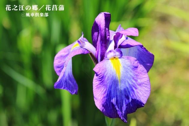 gardening_4229.JPG