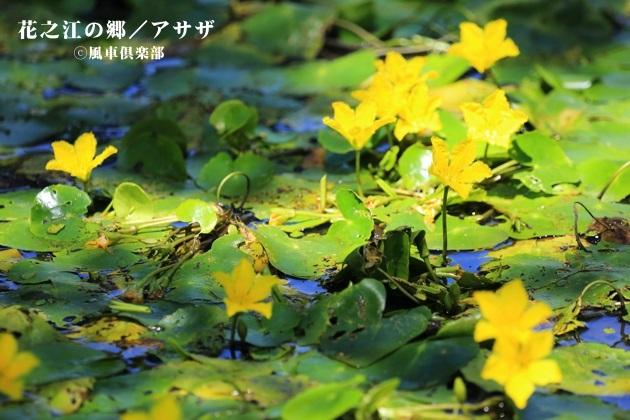 gardening_4230.JPG