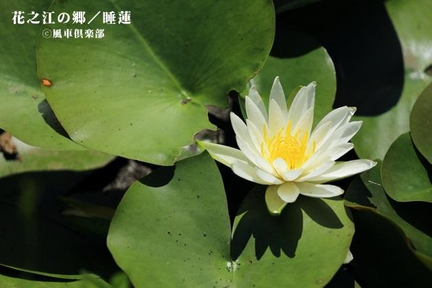 gardening_4232.JPG