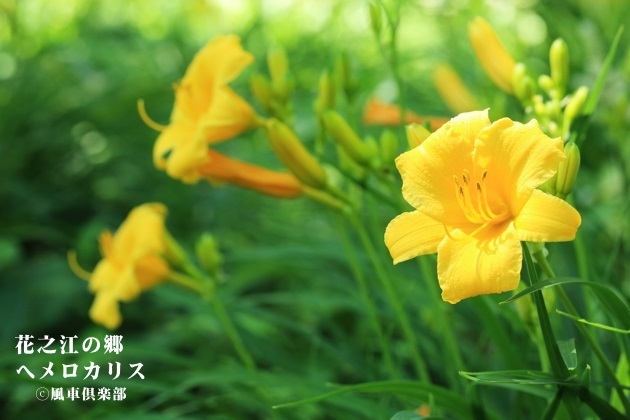 gardening_4235.JPG
