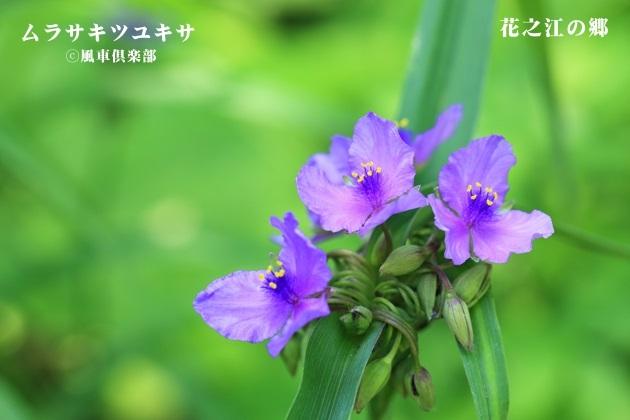 gardening_4236.JPG