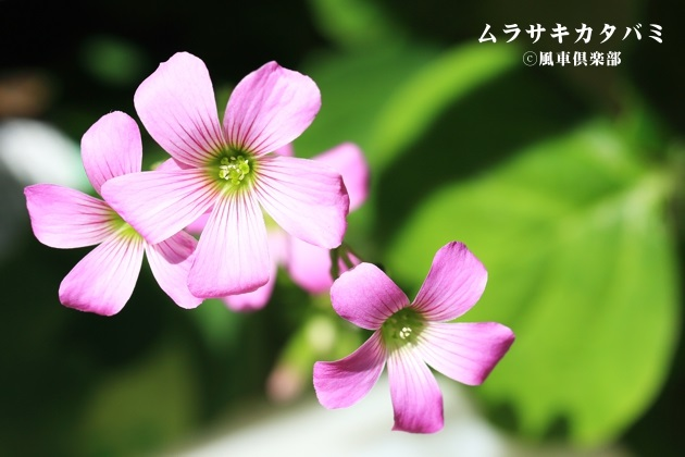 gardening_4237.JPG