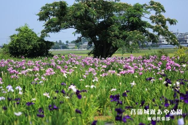 gardening_4262.JPG