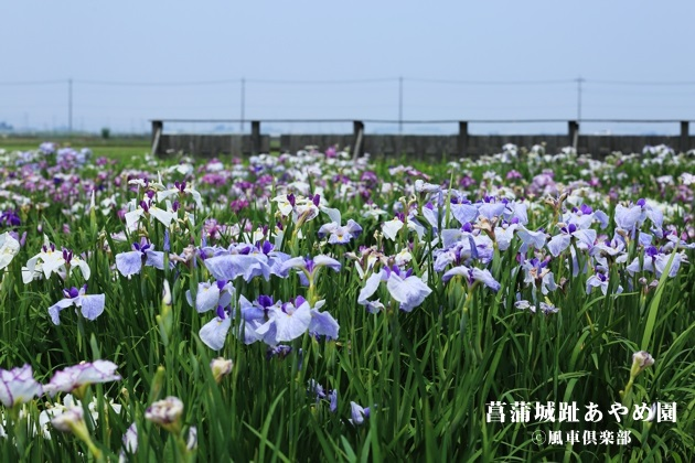 gardening_4263.JPG