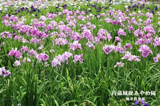 gardening_4264.JPG
