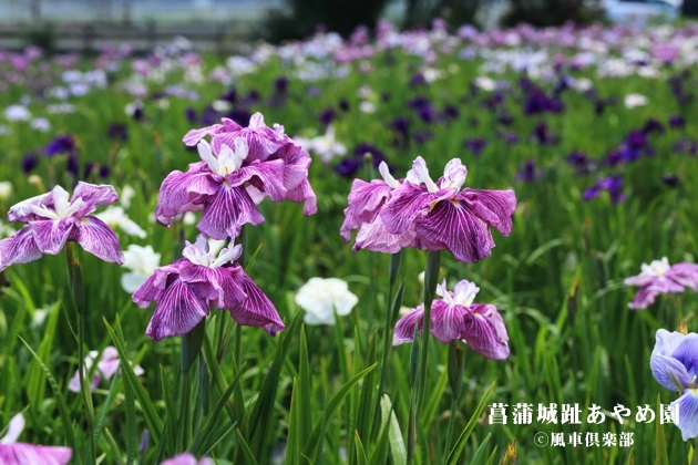 gardening_4265.JPG
