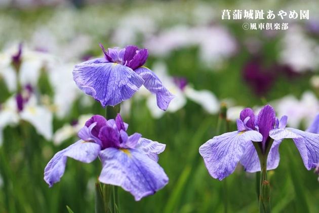 gardening_4266.JPG