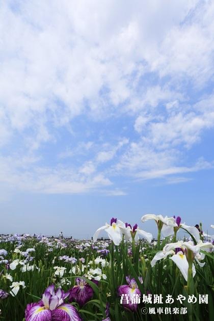 gardening_4268.jpg