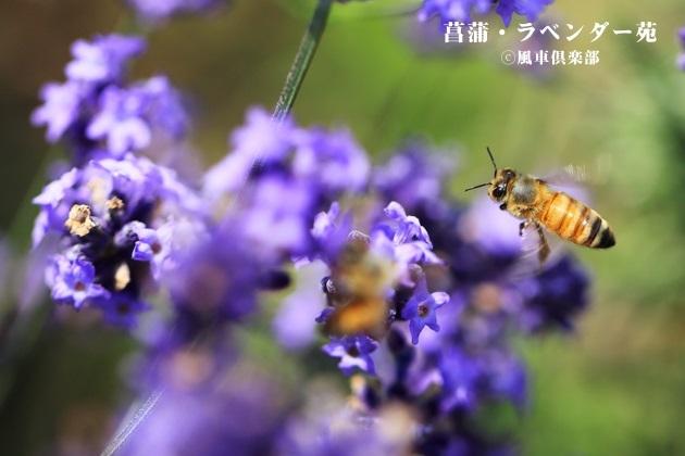 gardening_4271.jpg