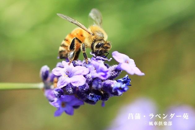 gardening_4272.JPG
