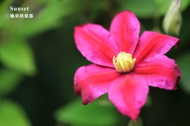gardening_4273.JPG