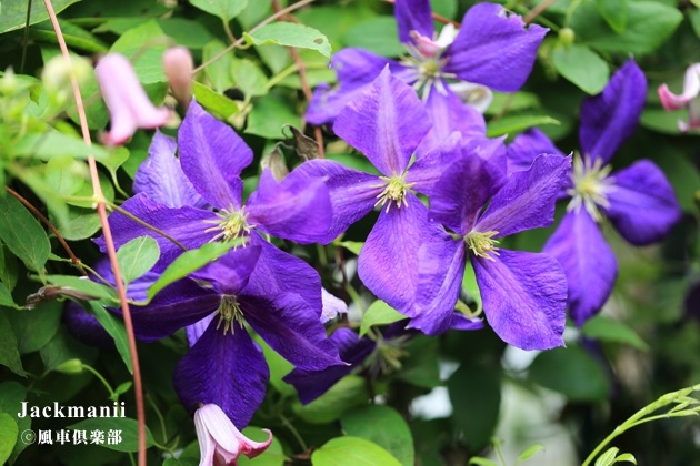gardening_4275.JPG