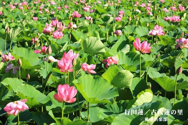 gardening_4277.JPG