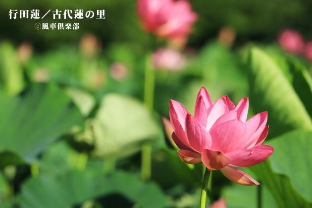 gardening_4278.JPG