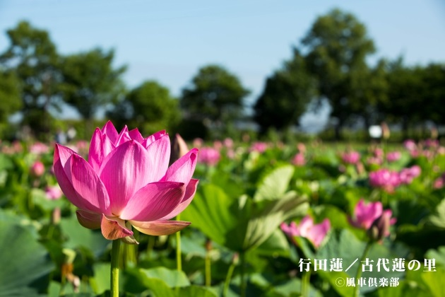 gardening_4279.jpg