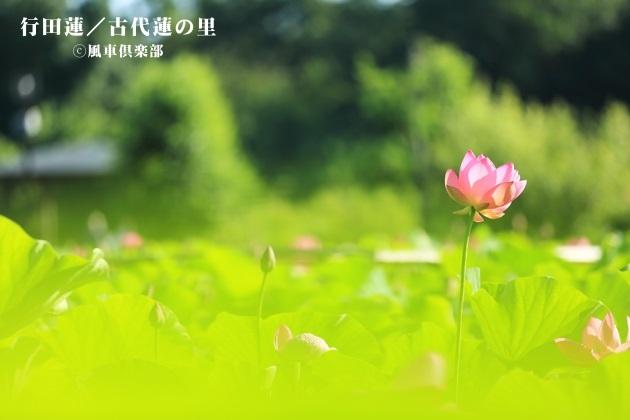gardening_4280.JPG