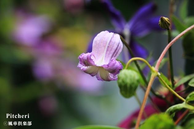 gardening_4289.JPG