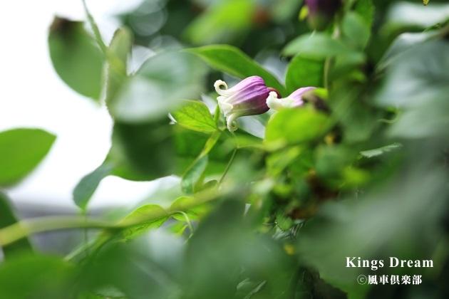 gardening_4290.JPG