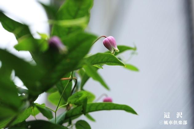 gardening_4291.JPG